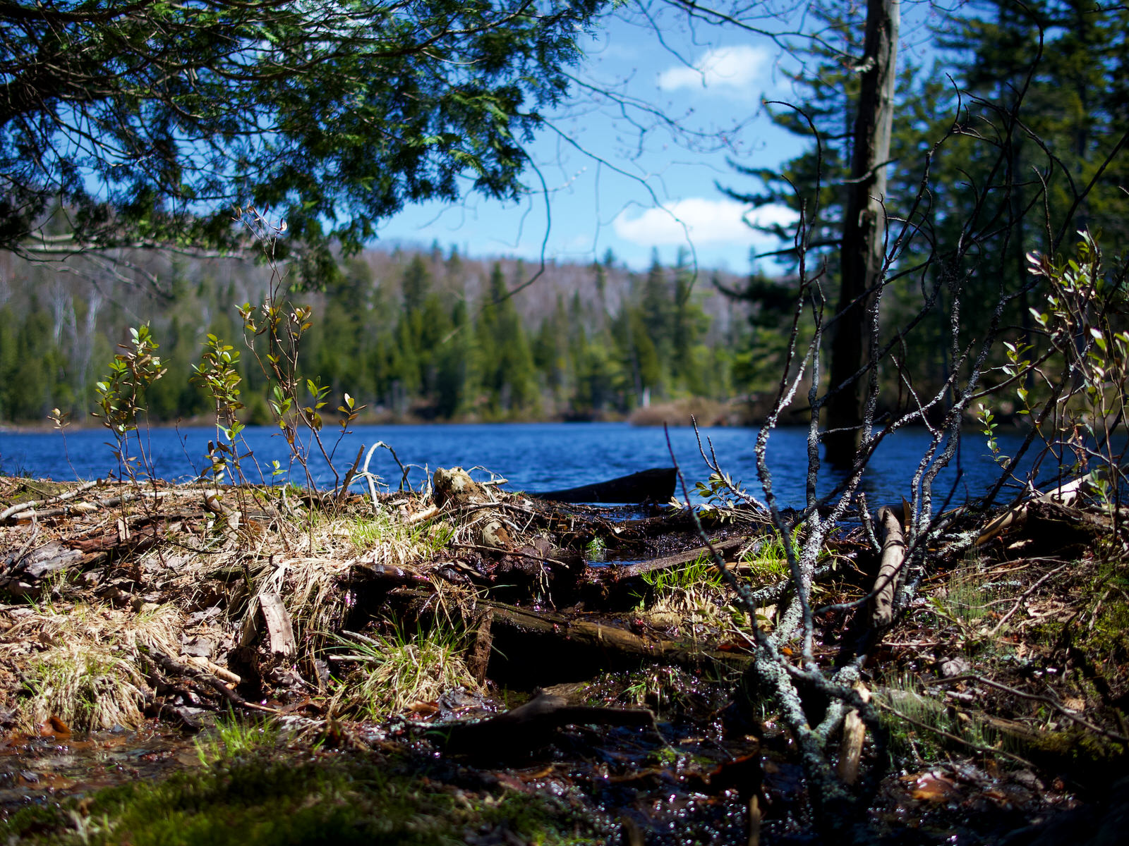 Un lac créé par un barrage de castor