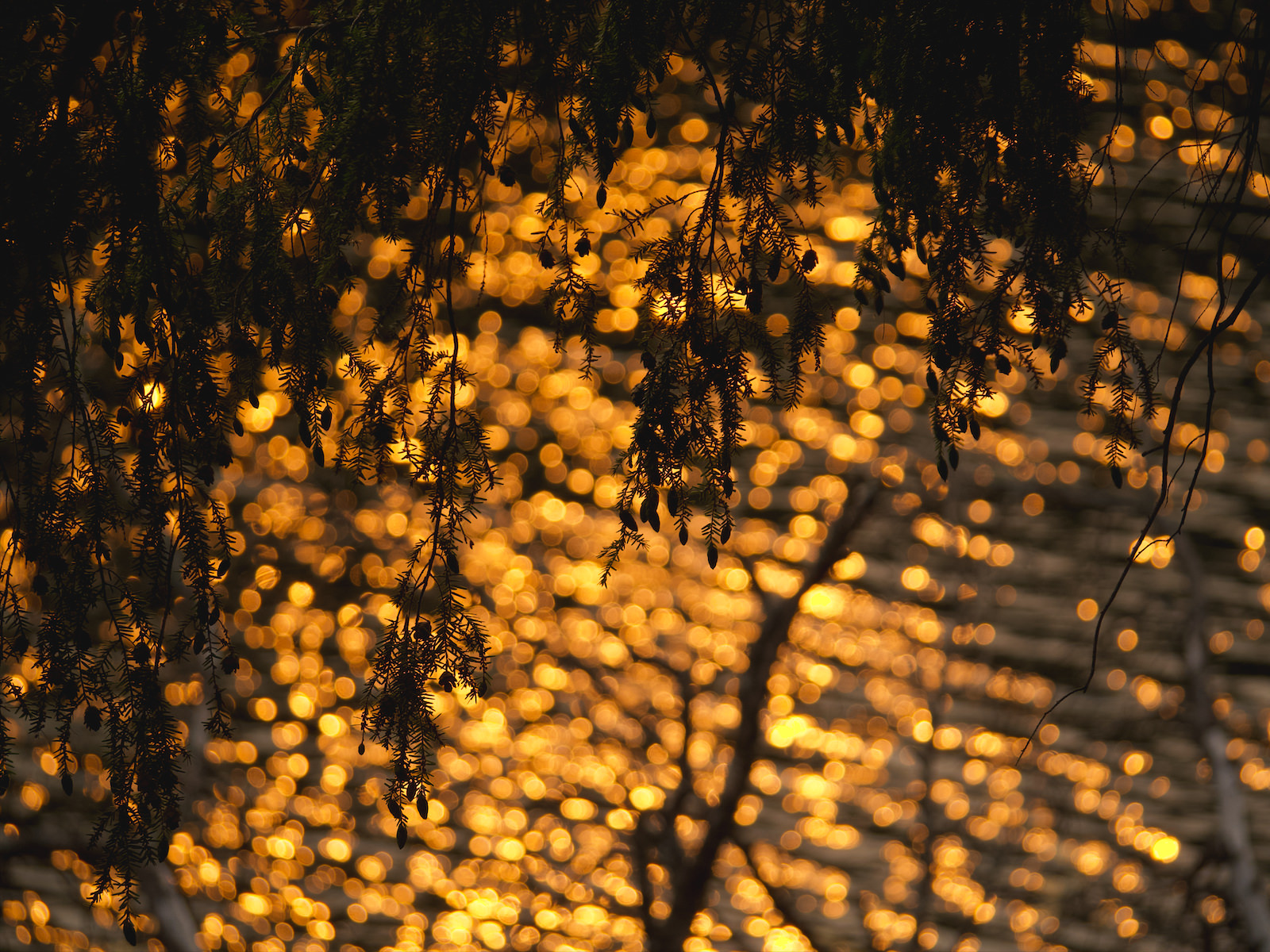 Reflets de soleil couchant sur le lac.