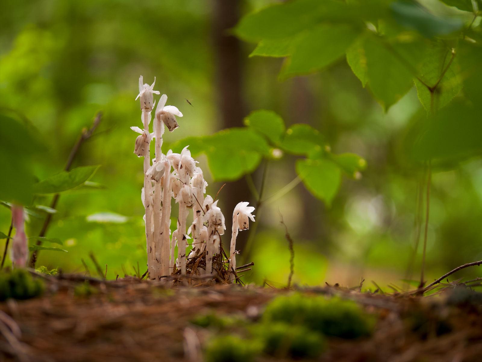 Une famille de champignon.