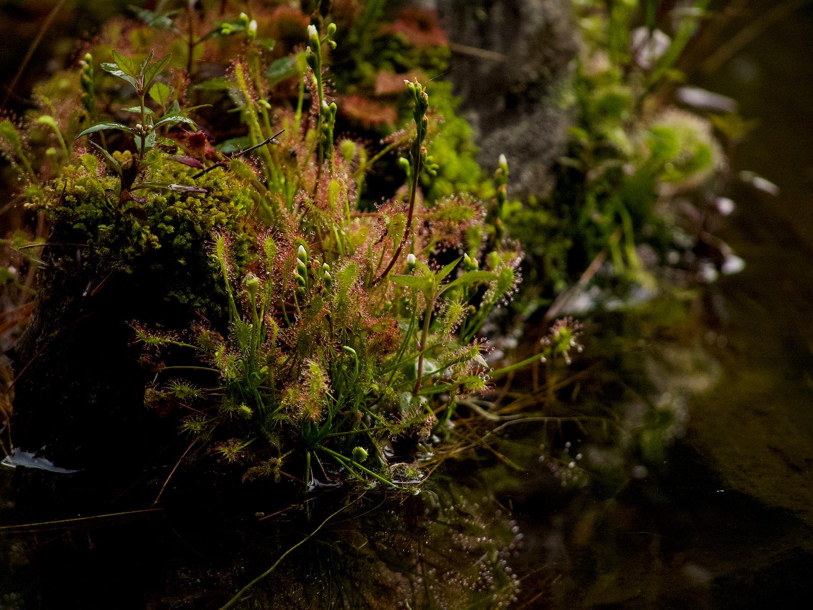 Des plantes carnivores.