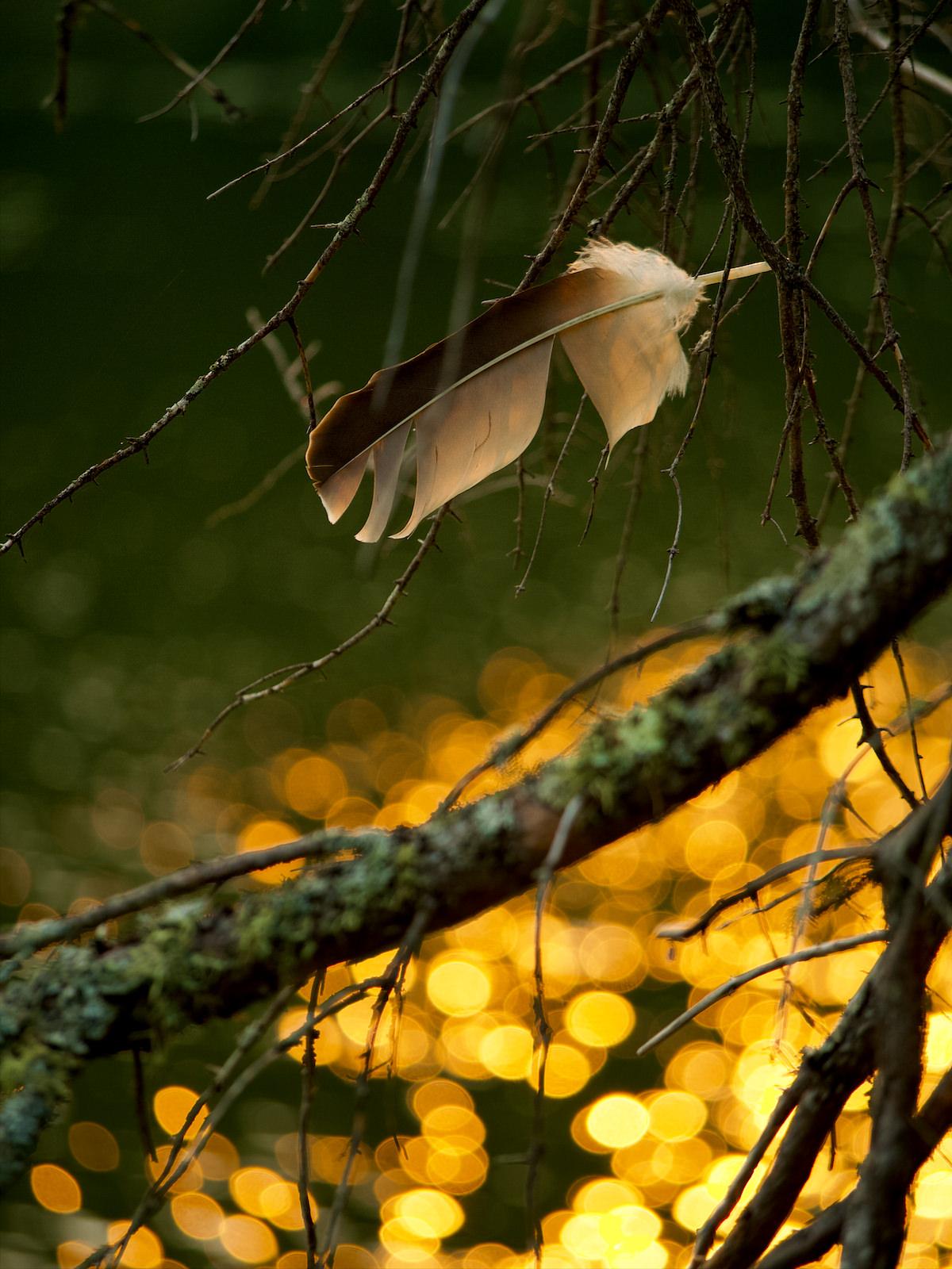 Une plume accrochée à une branche.