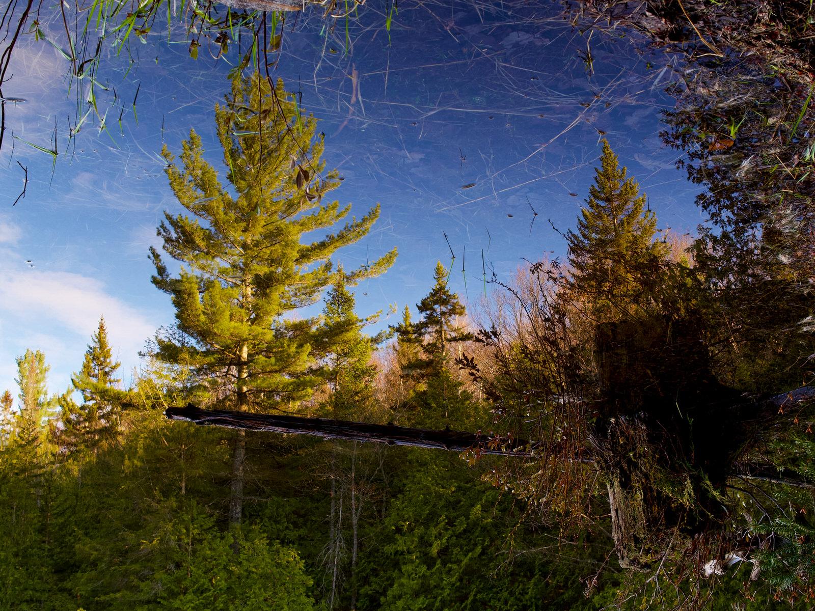 Reflet d'un arbre sur un lac