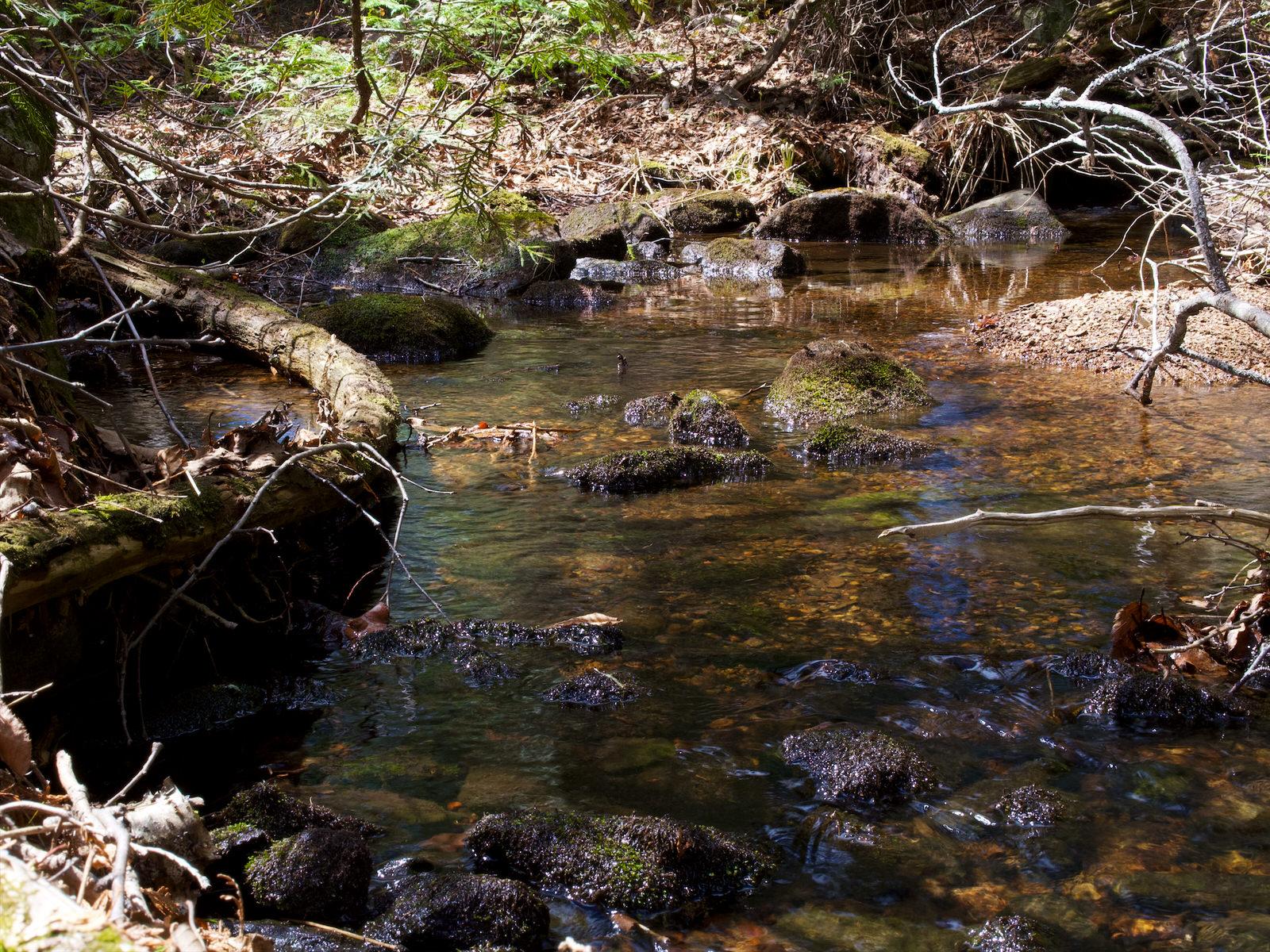 Un ruisseau au milieu de la forêt canadienne