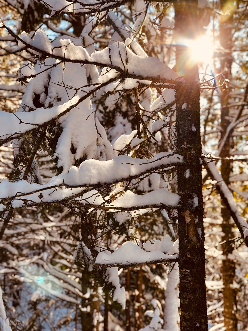 Soleil à travers les arbres