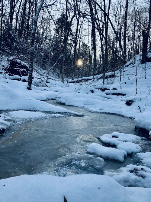 A stream in the forest, totally iced.